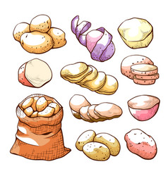 potatoes hand drawn set uncooked farm food vector image