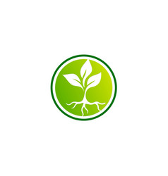 Seed plant round logo vector
