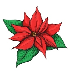 Hand drawn Poinsettia Christmas Star vector