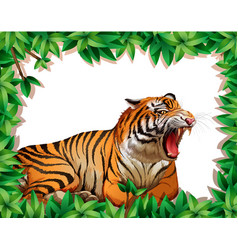 tiger in nature frame vector image