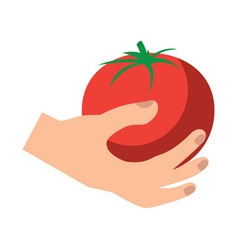tomato vegetable icon image vector image