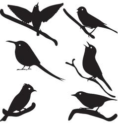 Bird Silhouettes bird on branch vector