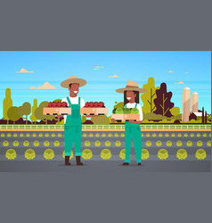 Couple farmers holding boxes red green tomatoes vector