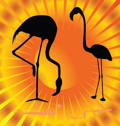 Flamingo on orange background vector