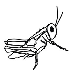 Grasshoper drawing on white background vector