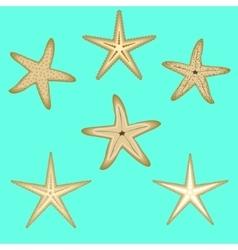 Starfish a set six options vector