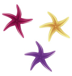 Starfishes vector