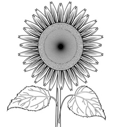 sun flower with leaves out line vector image vector image