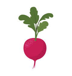 White background of red beet with stem and leaves vector
