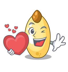 With heart cedar pine nuts on a cartoon vector