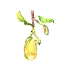 fetus jackfruit watercolor tropical leaves vector image