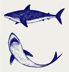 Reef Shark vector image vector image