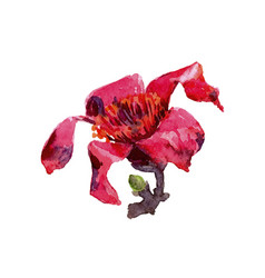 red flower watercolor tropical leaves isolated vector image