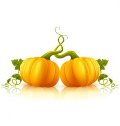 orange pumpkins vector image