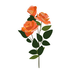 Roses icon on a white background three vector