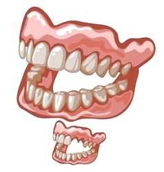 Funny dentures with white natural-looking teeth vector image vector image