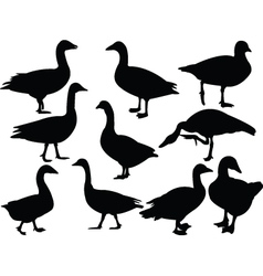 goose collection vector image