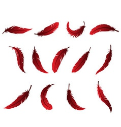 Beautiful Feather Design for Logo vector image vector image