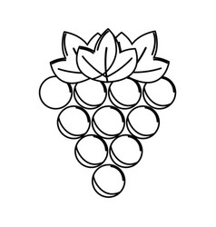 silhouette grapes fruit icon image vector image