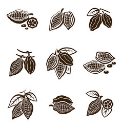 cocoa beans set vector image