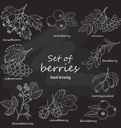 Set of forest berries on dark background vector