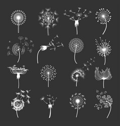 dandelion flower set vector image