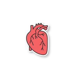 Human heart anatomy patch vector