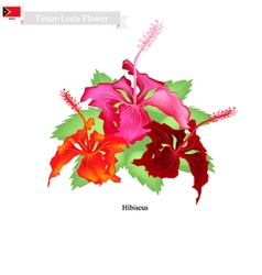 National Flower of Timor Leste Hibiscus Flowers vector