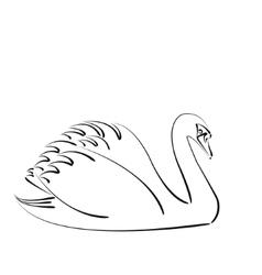 Sketched swan vector