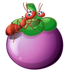 The two ants and the violet fruit vector image