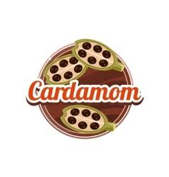 Cardamom Spice vector image