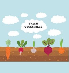fresh organic vegetable garden on blue sky vector image