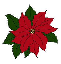 hand drawn poinsettia flowers full color vector image