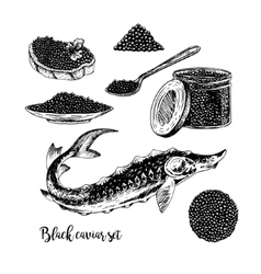 Hand drawn set of black caviar vector image