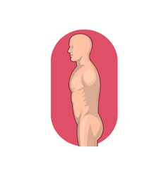 Male human anatomy standing side view vector image