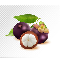 mangosteen isolated on transparent background two vector image