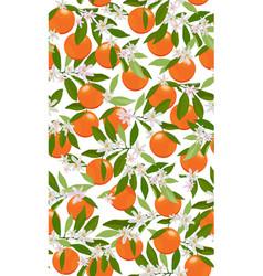 orange grapefruit panicle white vector image