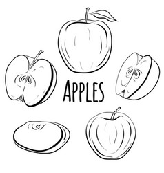 set of apples of different shapes vector image