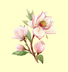 Watercolor magnolia floral composition vector
