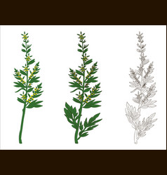 Branch of wormwood vector