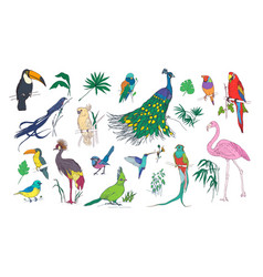 collection of beautiful tropical exotic birds with vector image