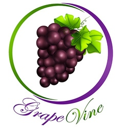 Grape vine on round label vector image