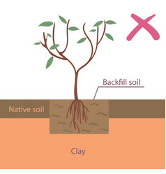 Incorrect tree planting flat vector