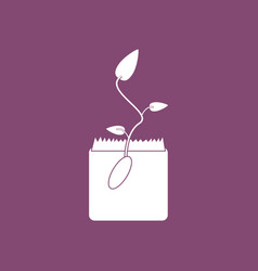 Icon flower buds vector