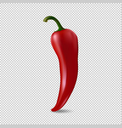 Realistic red chilli pepper icon isolated on vector