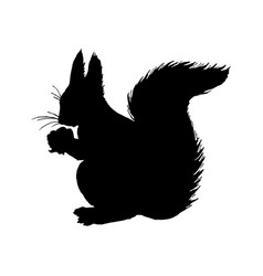 Squirrel silhouette black white icon vector