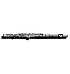 flute vector image
