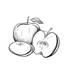black and white engraved of apples vector image