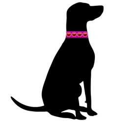 Dog flea collar vector image