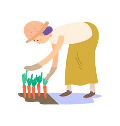 farmer is harvesting carrots vector image